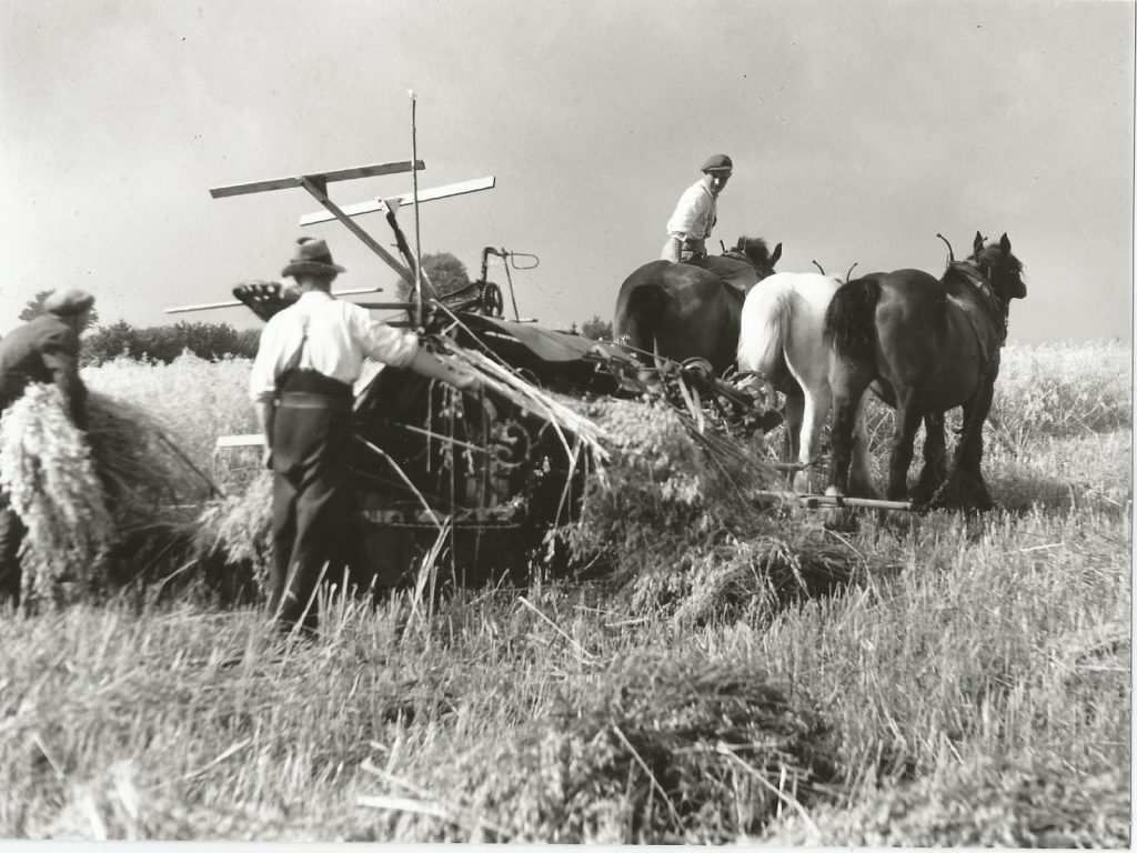 Harvesting at Lockton